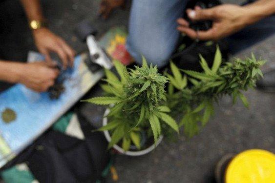 Аргентина легализовала использование марихуаны в медицинских целях