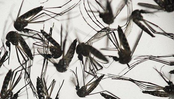 Ученые Китая и Франции создали вакцину от вируса Зика