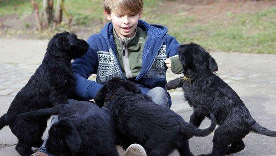 Домашние животные спасают детей от аллергии и ожирения