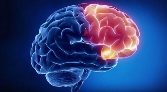 Средство от паразитов могут признать лечащим рак мозга