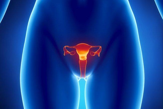 внутренние половые органы женщины графика