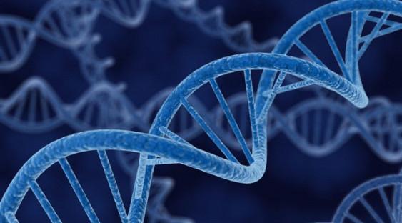Различия между мужчиной и женщиной проявляются в 6500 генах