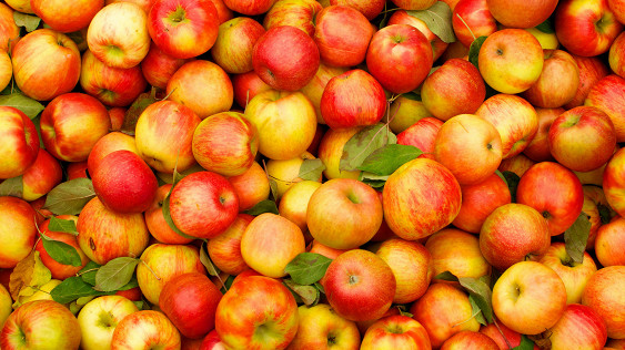 Ученые раскрыли полезные свойства яблок для здоровья