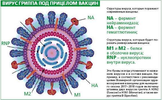 Смертность от прививок от гриппа в россии