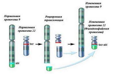 транслокация генов